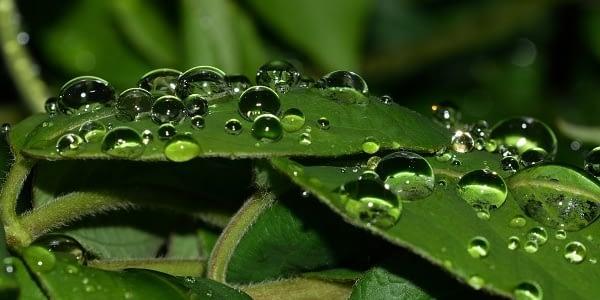 voda, příroda a život