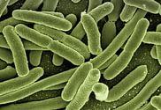 bakterie 1