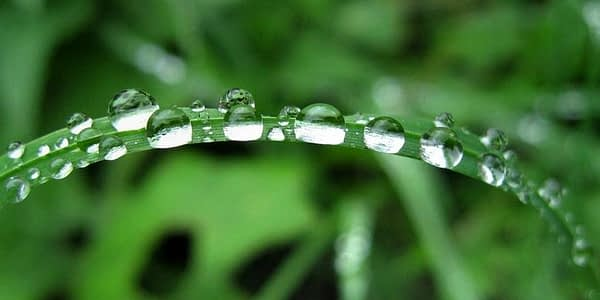 Voda je život